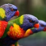 Ornithology and Bird Sites- Top 10