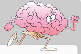 Brain 8