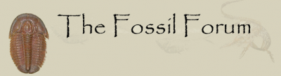 Fossils 4