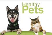 Pet Owners Sites – Top Ten