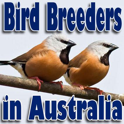 BirdBreedersInAus's Avatar
