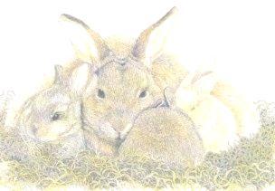 Rare Heritage Rabbits