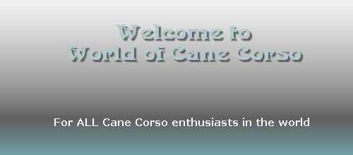 World of Cane Corso