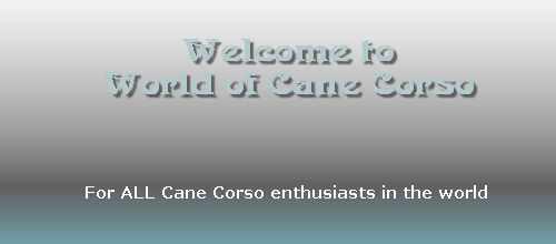 World of Cane Corso