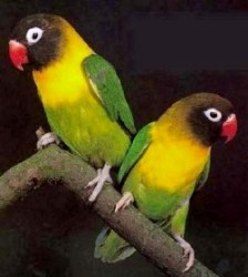 JAMROCK BIRDS Top Site List