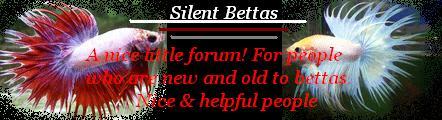 Silent Bettas