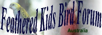 Feathered Kids Bird Forum