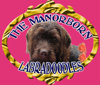 Manorborn Miniature English and Australian Labradoodles