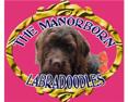 Manorborn Asd Miniature Australian Labradoodles