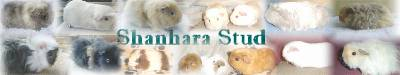 Shanharastud