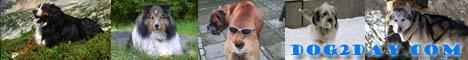 dog2day.com