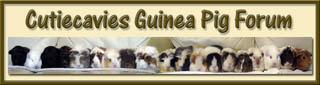 Cutiecavies Guinea Pig Forum