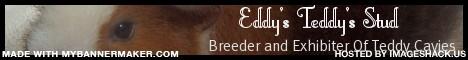 EddysTeddys
