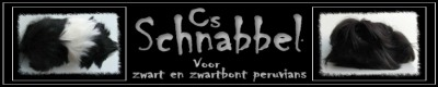 Cs Schnabbel