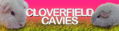 Cloverfield Cavies