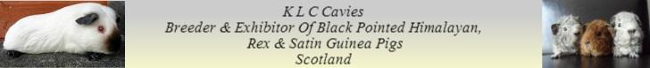 K.L.C Cavies