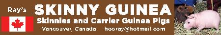 Ray's SKINNY GUINEA