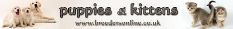 BreedersOnline - Pedigree Dogs & Cats