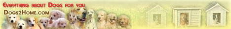 dogs2home.com
