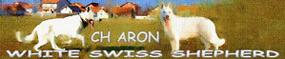 CH Aron, swiss white shepherd