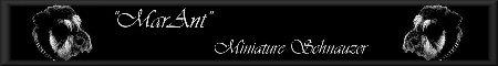 """Marant"" Miniature Schnauzer FCI"