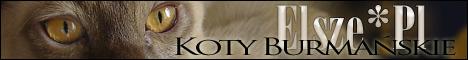 Elsze*Pl - burmese cats cattery