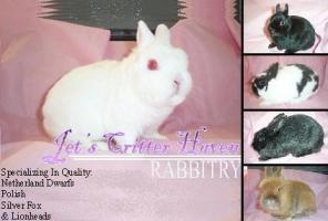 Jet's Critter Haven Rabbitry