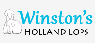 Winston's Holland Lops