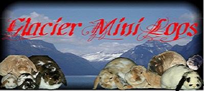 Glacier Mini Lops