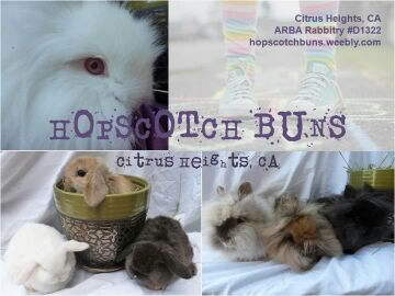 Hopscotch Buns