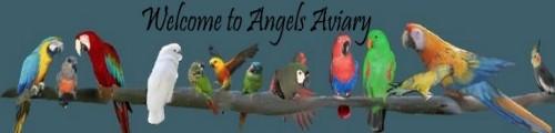 Angels Aviary