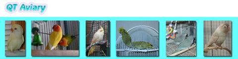 QT Aviary