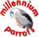 millennium parrots