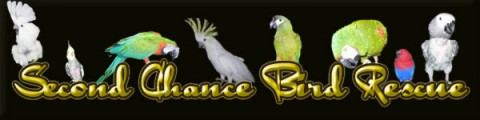 second chance bird rescue & rehab inc..