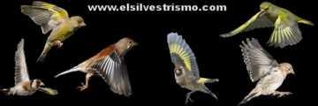 elsilvestrismo.com