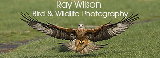 Ray Wilson Bird & Wildlife Photography