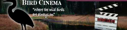 Bird Cinema