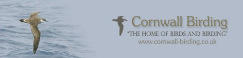 Cornwall Birding