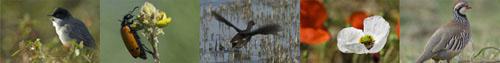 Aves Natureza