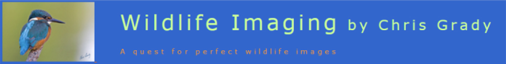 Wildlife Imaging