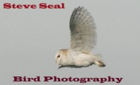 Steve Seal Bird Photography