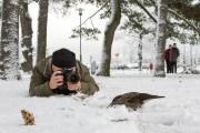 Nature Photographer - Petri Pietil�inen