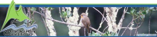 Madeira Wind Birds - Nature guide