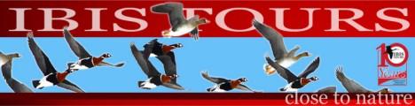 Ibis Tours - Birding trips, tours and hoidays in Danube Delta Romania