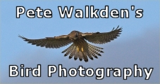 Pete Walkden's Bird Photography