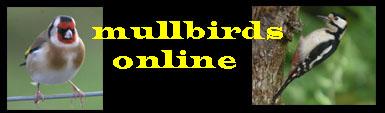 Mulbirds online