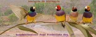 Ahoy Gouldian Breeders
