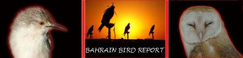 Bahrain Bird Report