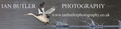 Ian Butler Photography