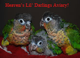 Heaven's Lil Darlings Aviary